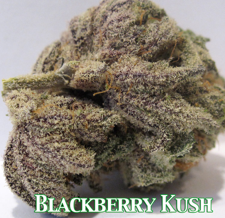 Blackberry Kush Weed