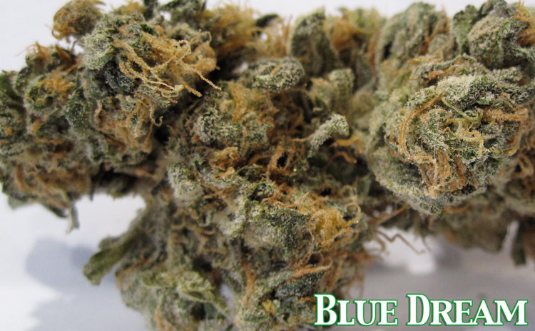 Blue Dream Medical Marijuana
