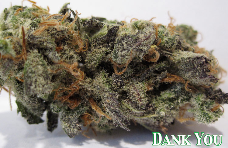 Dank You (northern lights x haze x dynamite)