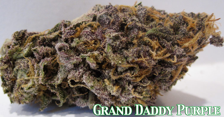 Grand Daddy Purple Medical Marijuana