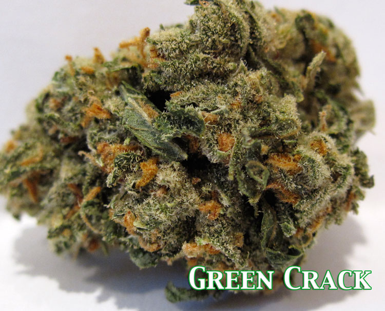 green crack sativa