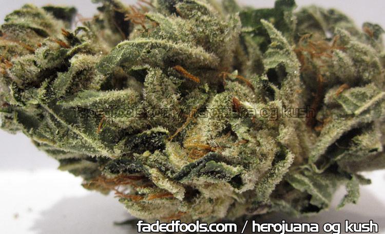 Herojuana OG Kush Picture