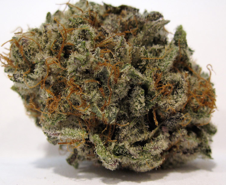platinum blackberry kush