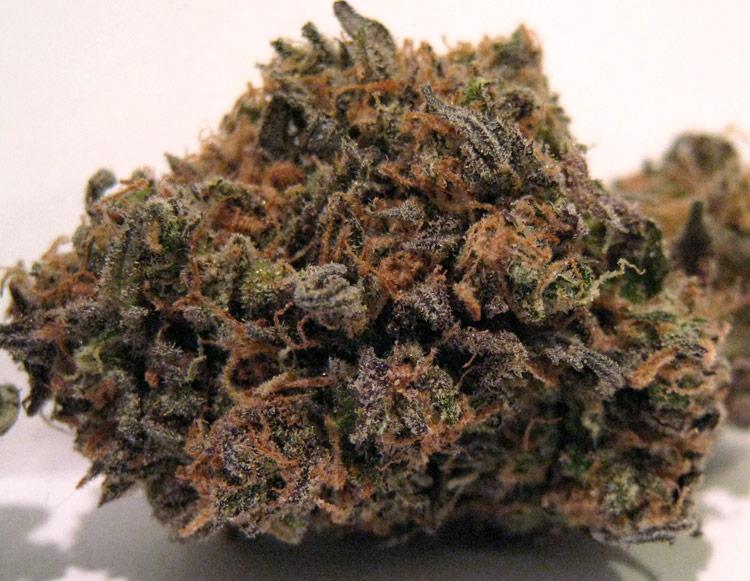 Purple G13