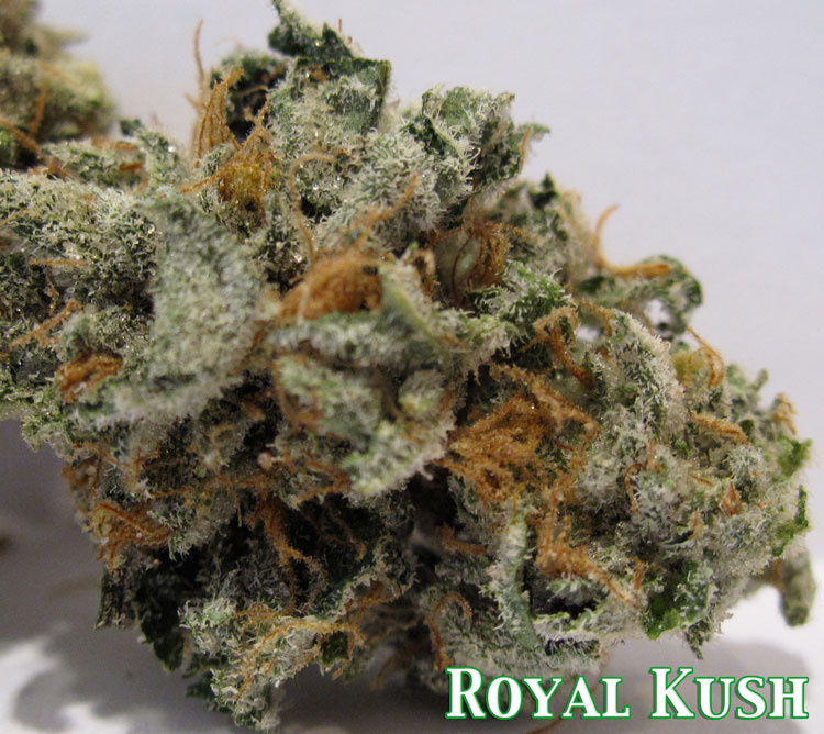 Royal Purple Kush